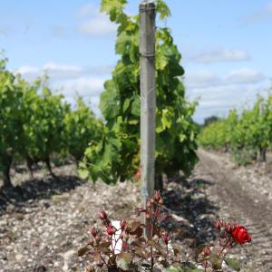 Aimer le vin et en apprendre plus